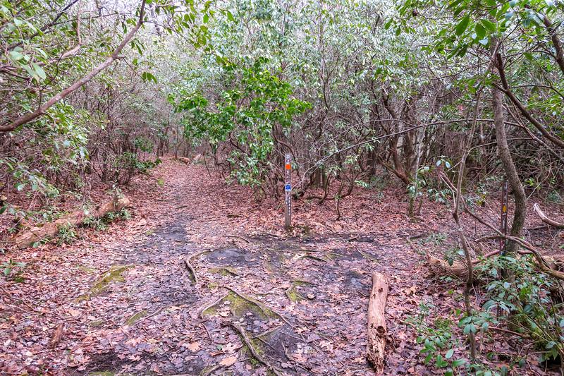 Long Branch-Cemetery Loop Trail Junction