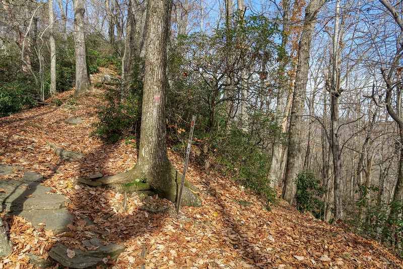 Bennett Gap-Perry Cove Trail Junction -- 3,350'