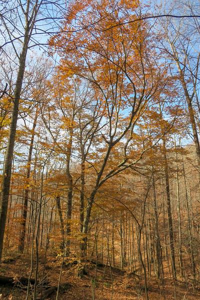 Coontree Loop Trail -- 2,800'