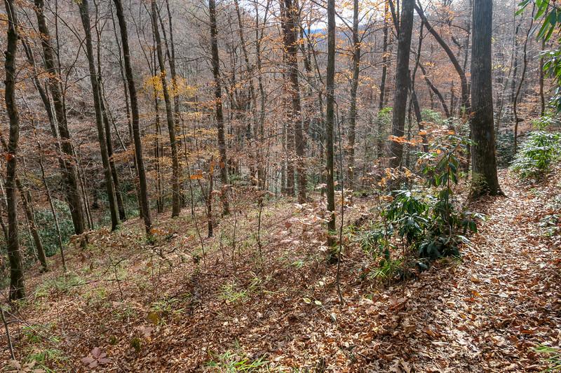 Coontree Loop Trail -- 2,700'