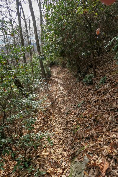 Coontree Loop Trail -- 3,100'