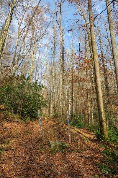 Coontree Loop Trail -- 2,320'