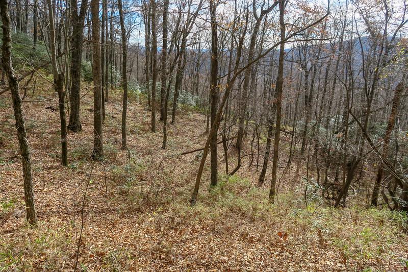 Coontree Loop Trail -- 3,200'