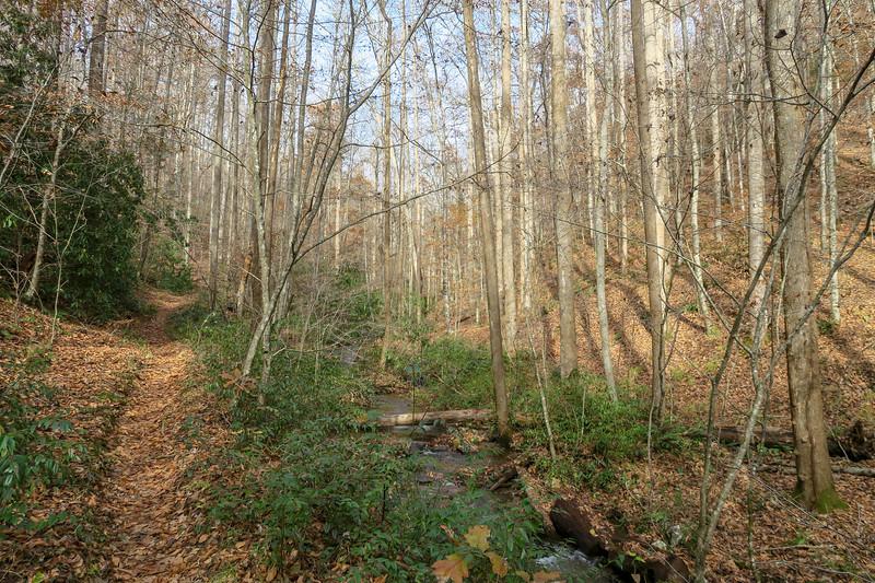 Coontree Loop Trail -- 2,420'