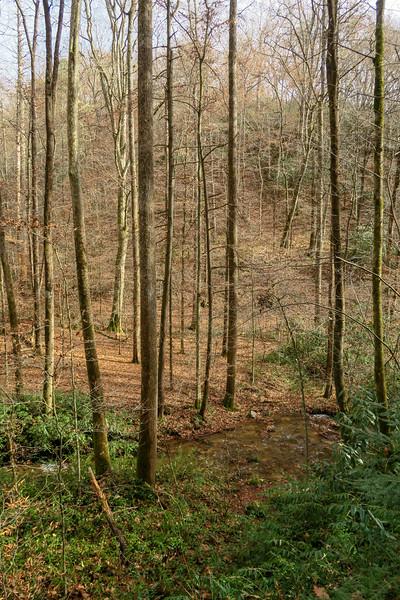 Coontree Loop Trail -- 2,380'