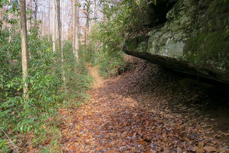Coontree Loop Trail -- 2,540'