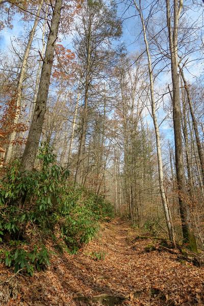 Coontree Loop Trail -- 2,400'