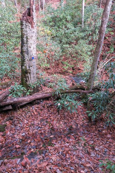 Coontree Loop Trail -- 2,850'
