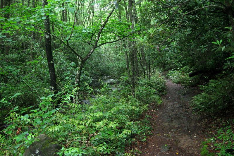 Summey Cove Trail
