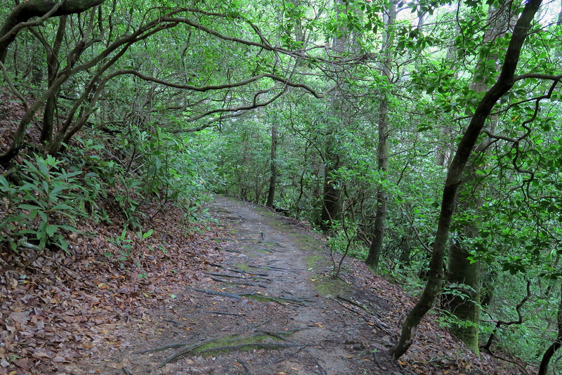 Cove Creek Trail