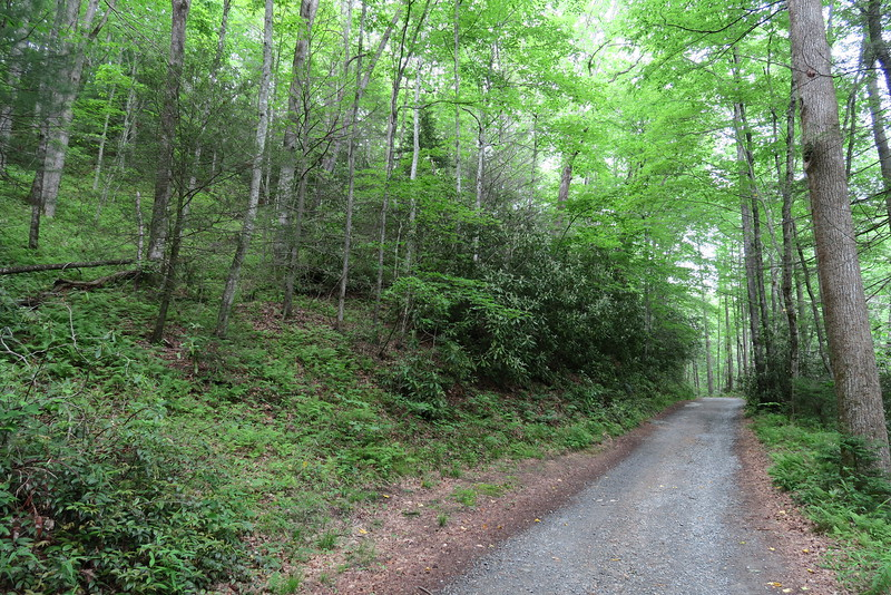 Caney Bottom Trail/Cove Creek Campground Road