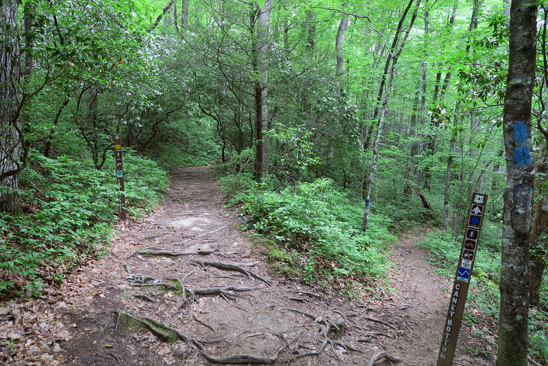 Cove Creek-Caney Bottom Trail Junction