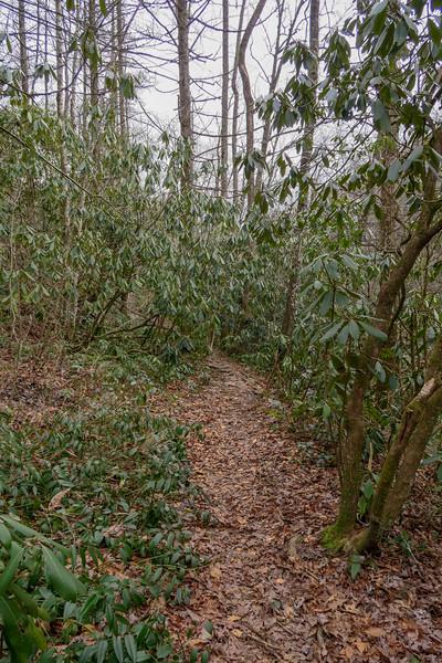 Old Davidson River Trail