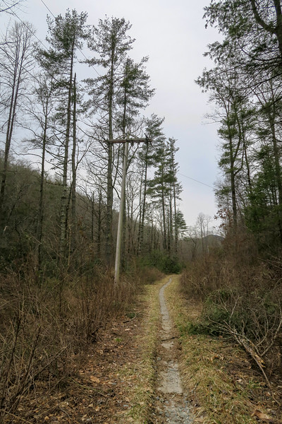 Davidson River Trail
