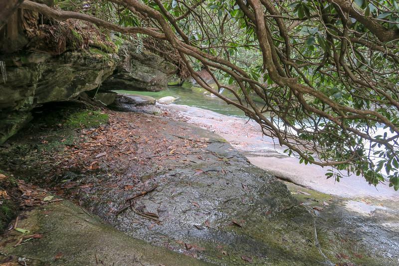 Davidson River Scramble