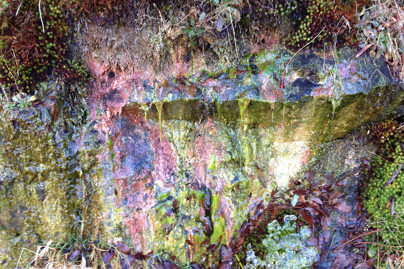 This pic didn't turn out quite as nice as I'd hoped...the groundwater seeping through the moss above this rock outcrop was painting some beautiful colors...