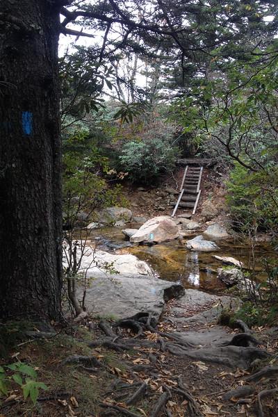 Flat Laurel Creek-Sam Knob Trail Junction