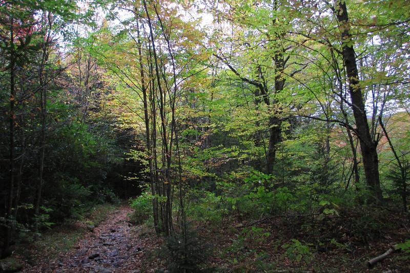 Flat Laurel Creek Trail