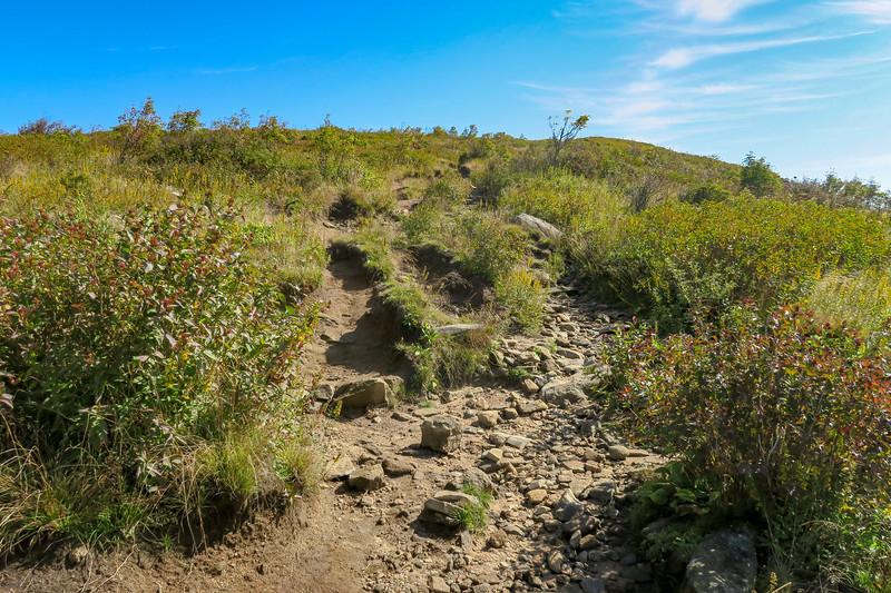 Art Loeb Trail -- 6,140'
