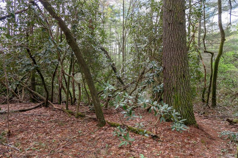 Foster Creek Trail -- 2,230'