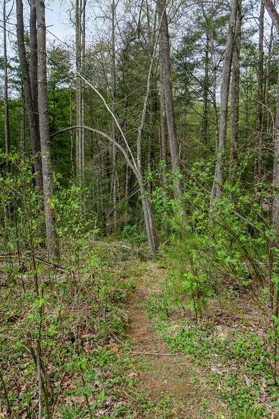 Foster Creek Trail (midpoint creek spur) -- 2,260'