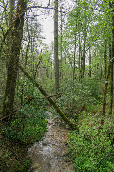 Foster Creek -- 2,290'