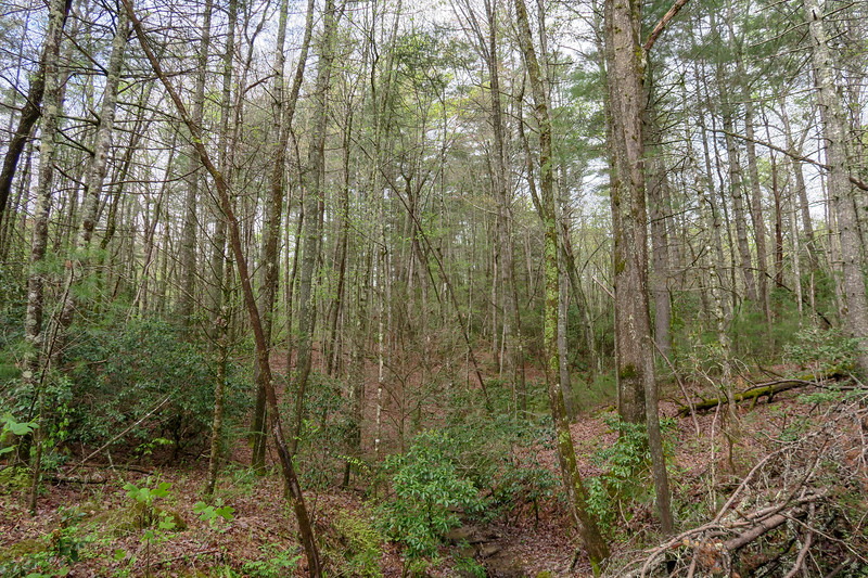 Foster Creek Trail -- 2,260'