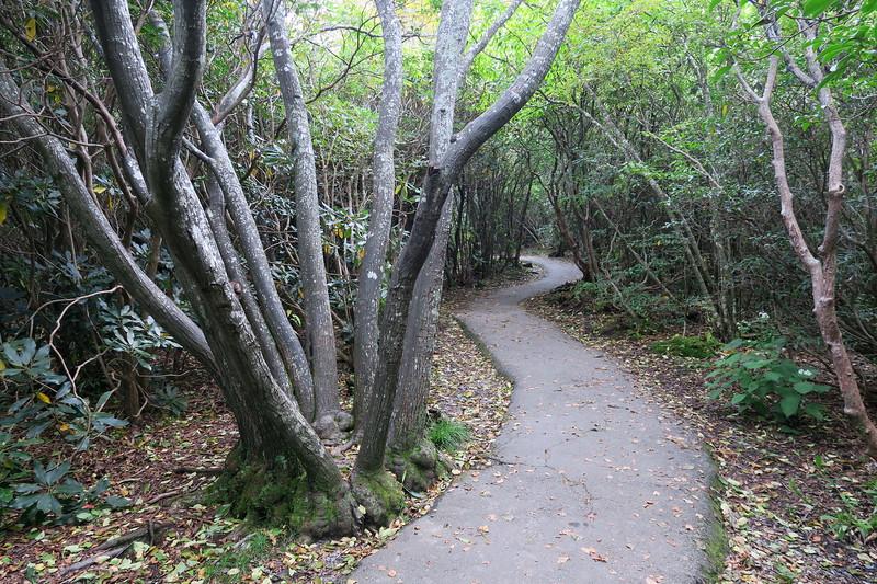 Graveyard Fields Loop Trail