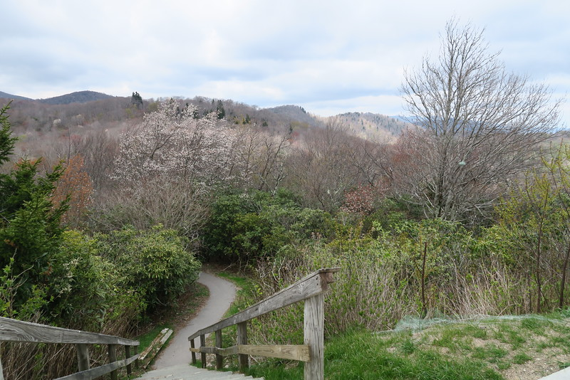 Graveyard Fields Loop Trailhead