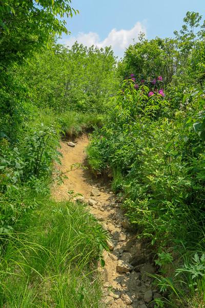 Art Loeb Trail -- 5,820'