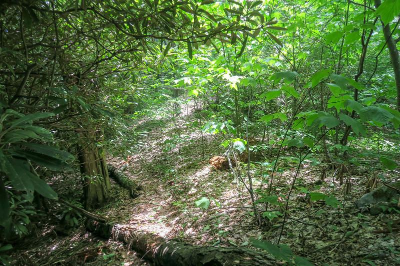 Green Mountain Trail -- 5,100'