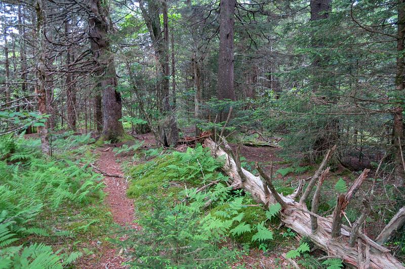 Green Mountain Trail -- 5,700'