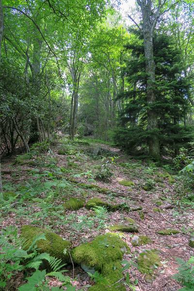 Green Mountain Trail -- 5,150'
