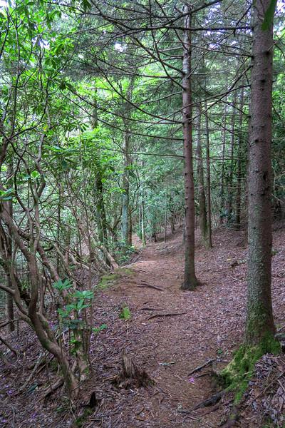 Mountains-to-Sea Trail -- 5,130'