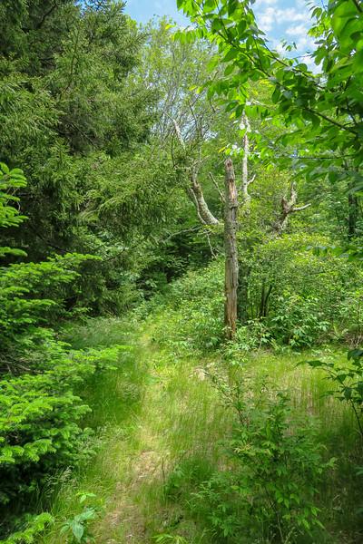 Green Mountain Trail -- 5,460'