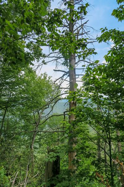 Green Mountain Trail -- 4,930'