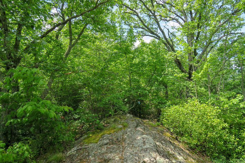 Green Mountain Trail -- 4,300'