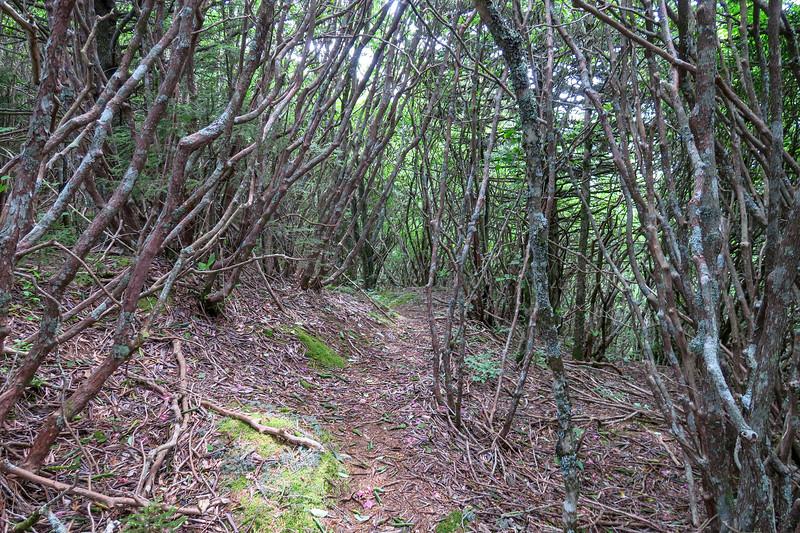 Green Mountain Trail -- 5,820'