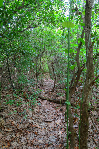 Green Mountain Trail -- 4,120'