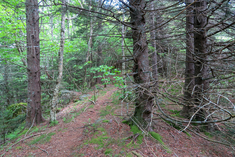 Green Mountain Trail -- 5,500'