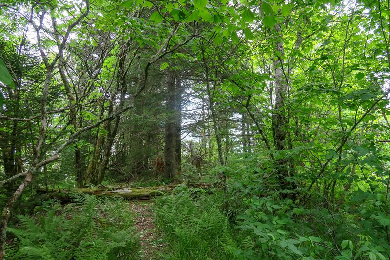 Green Mountain Trail -- 5,870'