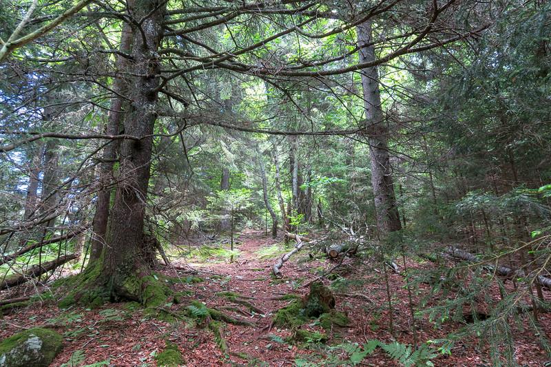 Green Mountain Trail -- 5,340'