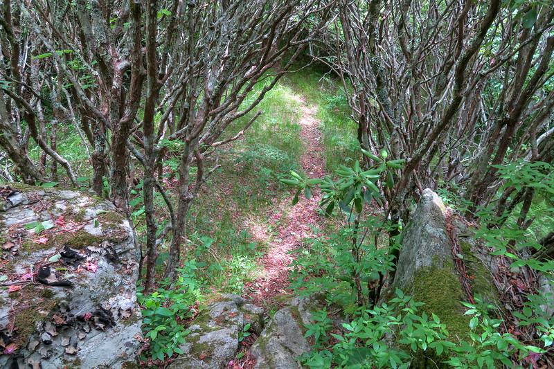 Green Mountain Trail -- 5,780'