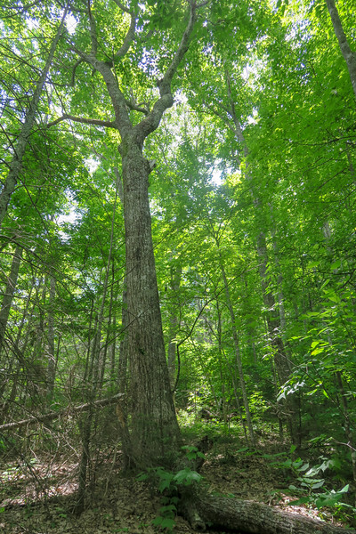 Green Mountain Trail -- 4,960'