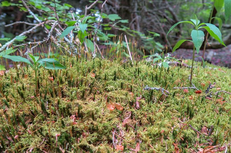 Green Mountain Trail -- 5,760'