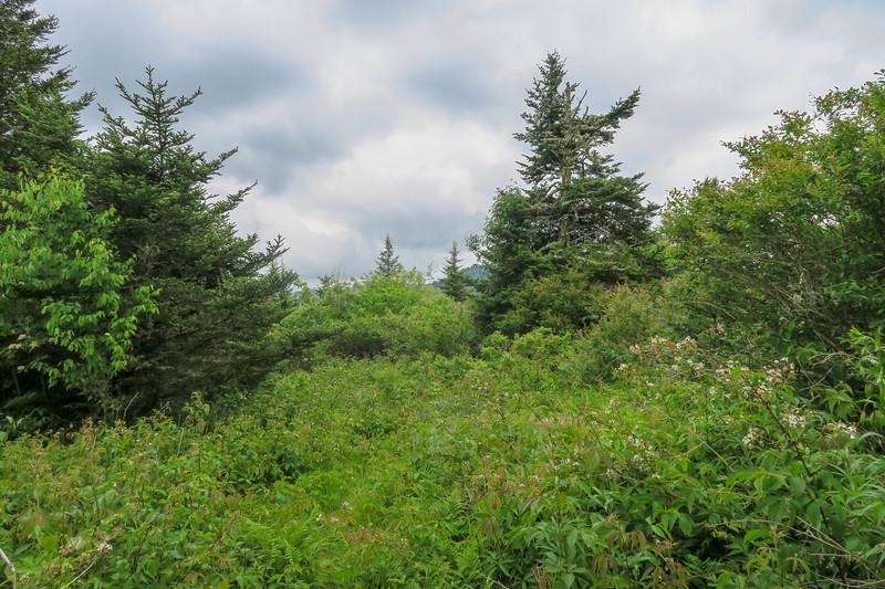 Green Mountain Trail -- 5,890'