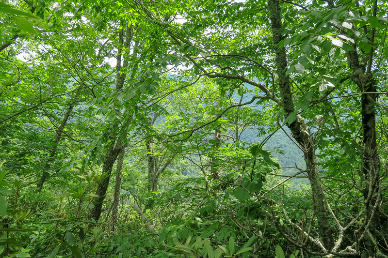 Green Mountain Trail -- 4,100'