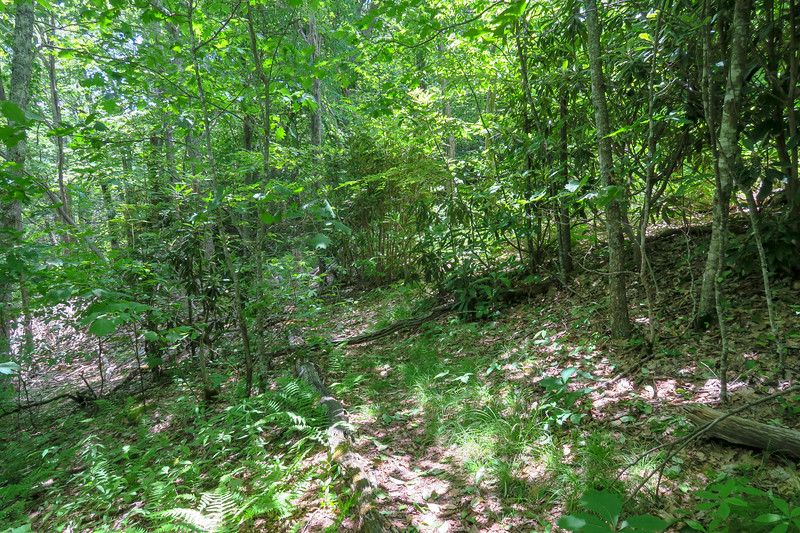 Green Mountain Trail -- 5,120'