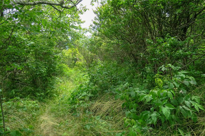 Green Mountain Trail -- 5,830'