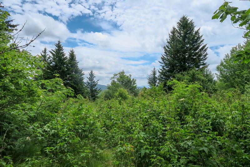 Green Mountain Trail -- 5,420'